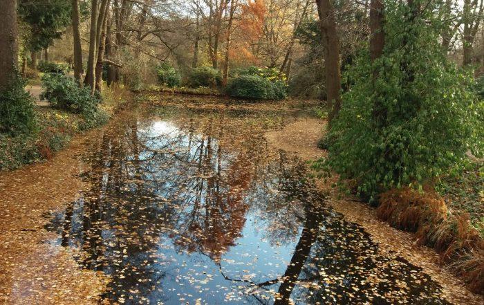 Autumn in the Tiergarten